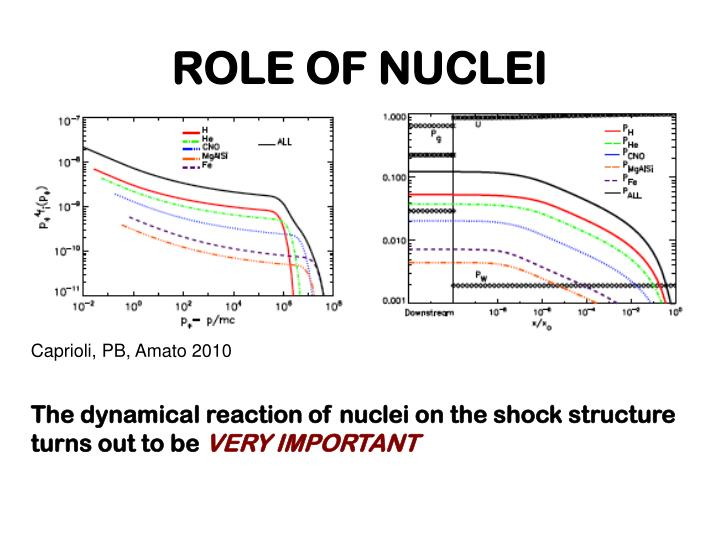 ROLE OF NUCLEI