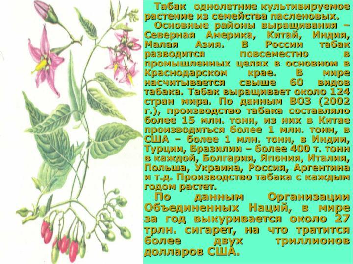 Табак  однолетние культивируемое растение из семейства пасленовых.