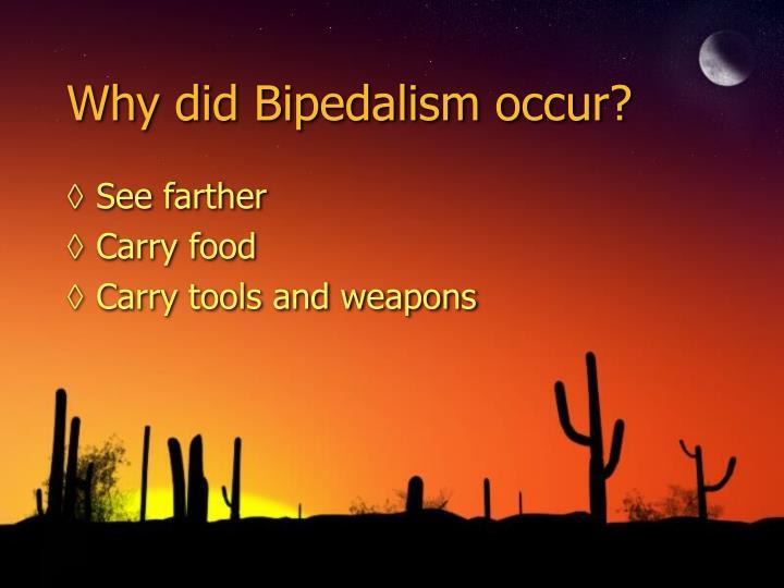 Why did Bipedalism occur?
