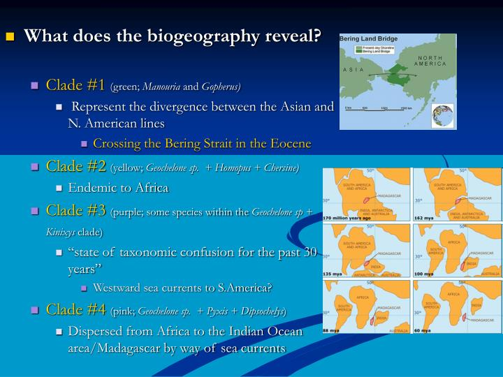 What does the biogeography reveal?