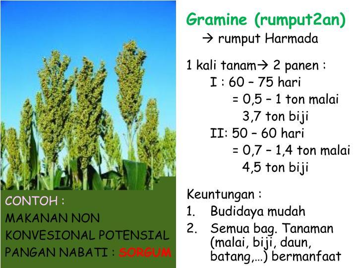 Gramine (rumput2an)