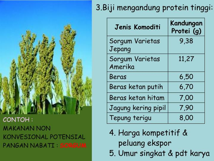 3.Biji mengandung protein tinggi: