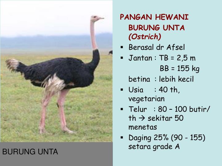 PANGAN HEWANI