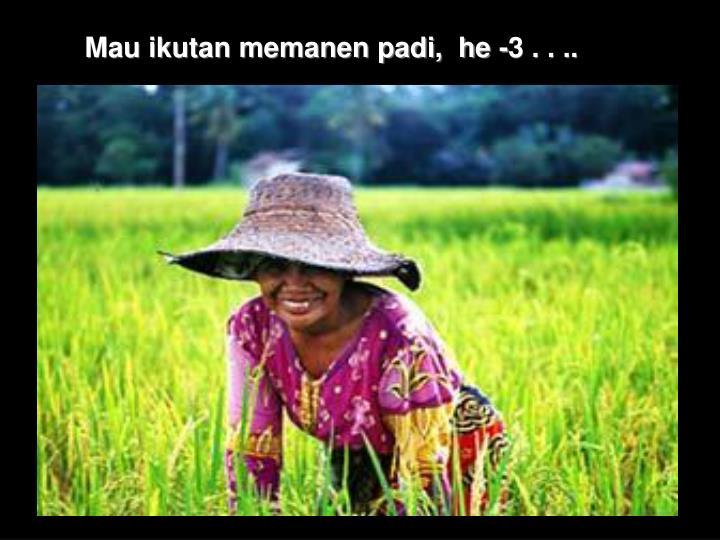 Mau ikutan memanen padi,  he -3 . . ..