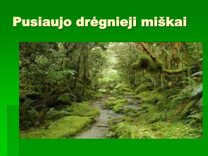 Pusiaujo drėgnieji miškai