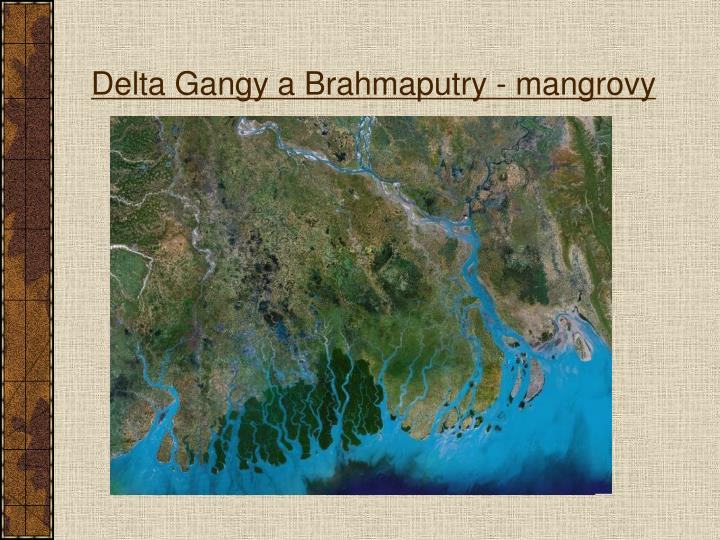 Delta Gangy a Brahmaputry - mangrovy