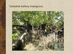 vzdu n ko eny mangrov