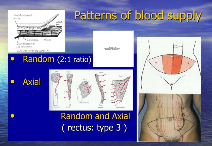 Patterns of blood supply