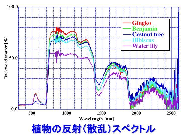 植物の反射(散乱)スペクトル