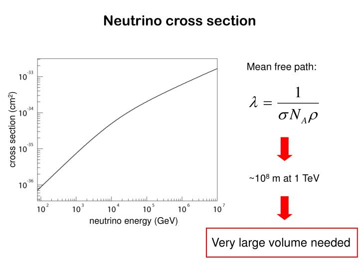 Neutrino cross section