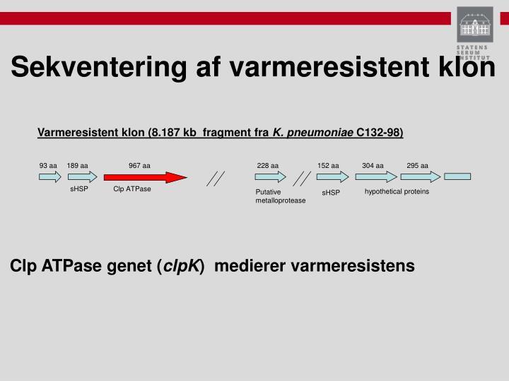 Varmeresistent klon (8.187 kb  fragment fra