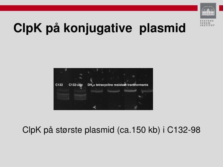 ClpK på konjugative  plasmid
