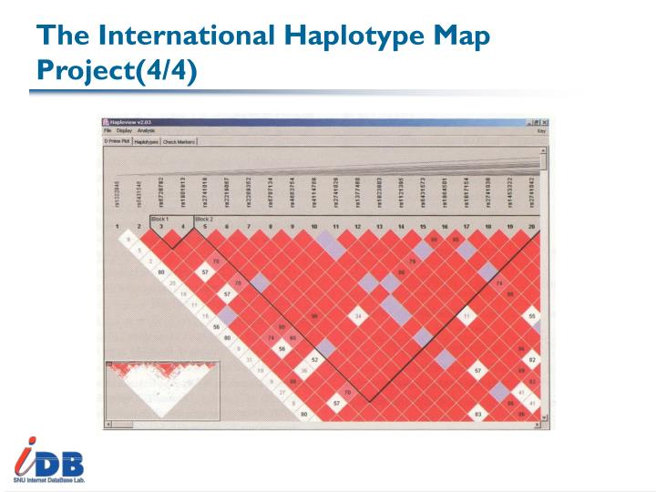 The International Haplotype Map Project(4/4)