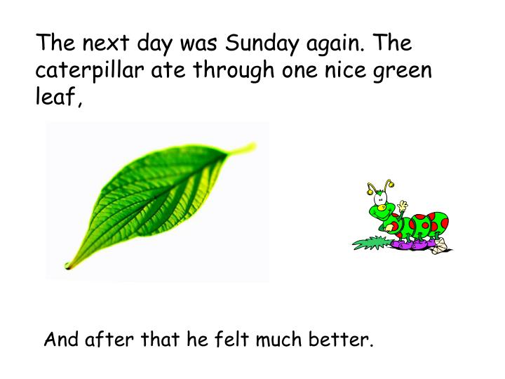 The next day was Sunday again. The caterpillar ate through one nice green leaf,