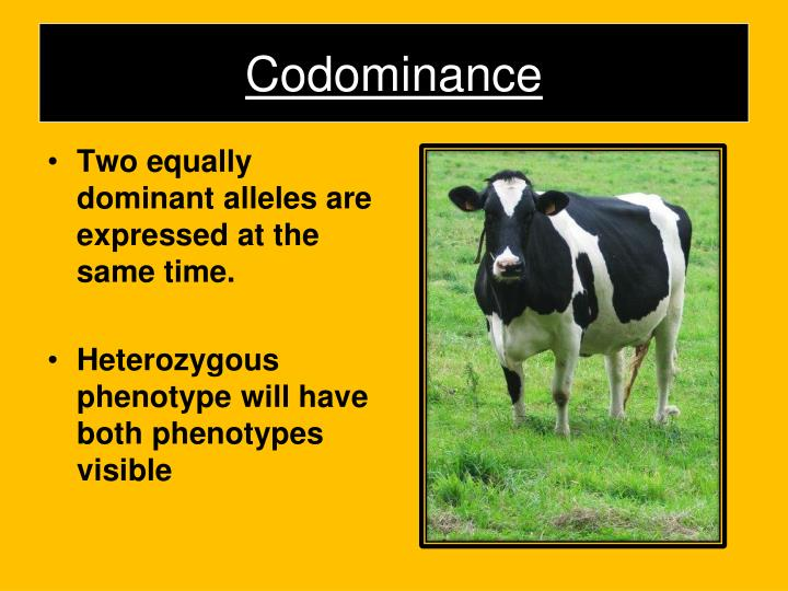 PPT - Incomplete Dominance PowerPoint Presentation - ID ...