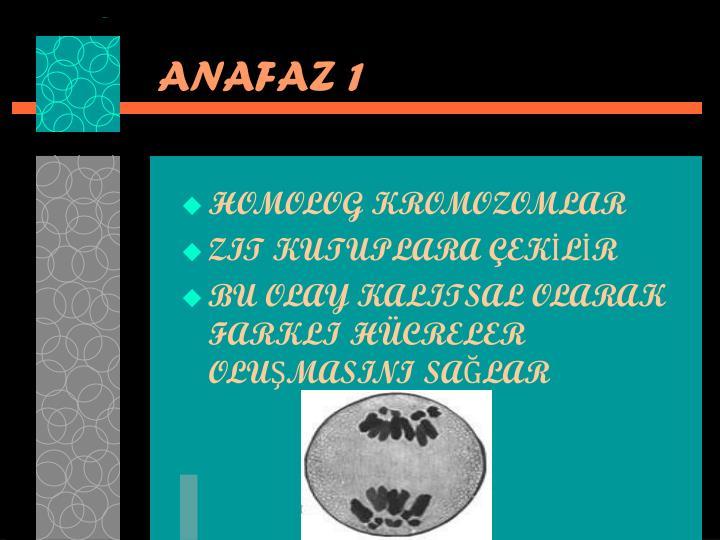 ANAFAZ 1
