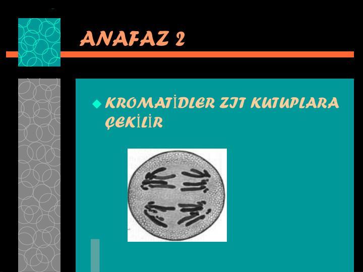 ANAFAZ 2