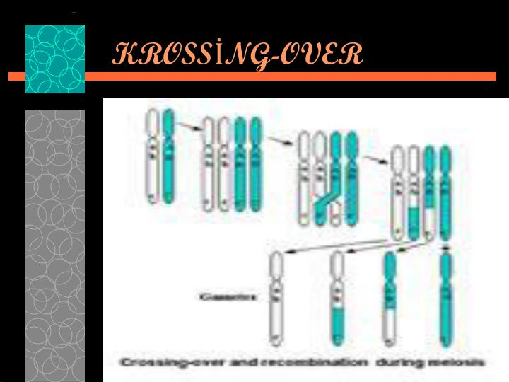 KROSSİNG-OVER