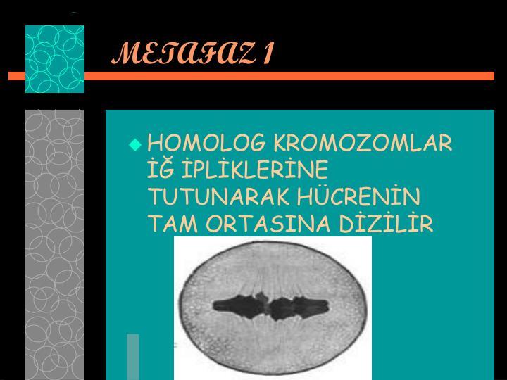 METAFAZ 1