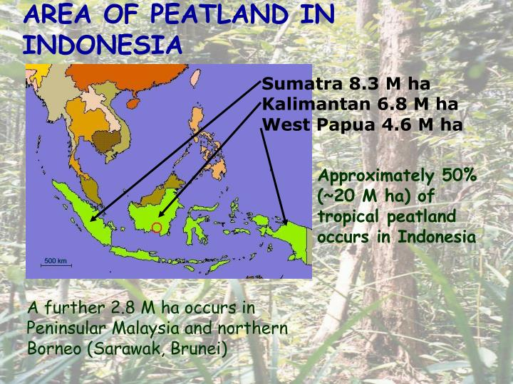 AREA OF PEATLAND IN INDONESIA