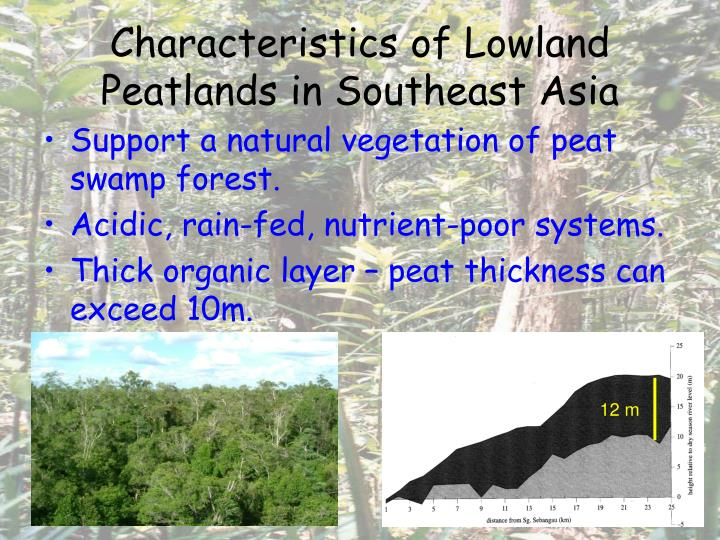 Characteristics of Lowland Peatlands in Southeast Asia