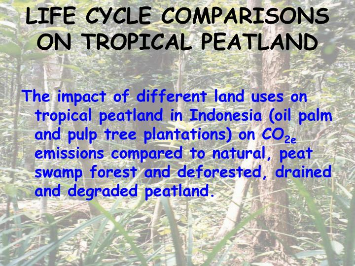 LIFE CYCLE COMPARISONS ON TROPICAL PEATLAND