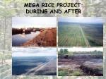 mega rice project during and after