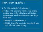 ho t h a t b o t6