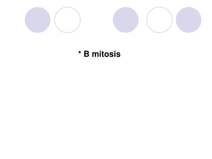 * B mitosis