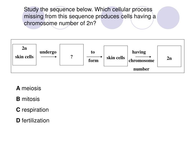 Study the sequence below. Which cellular process missing from this sequence produces cells having a chromosome number of 2n?