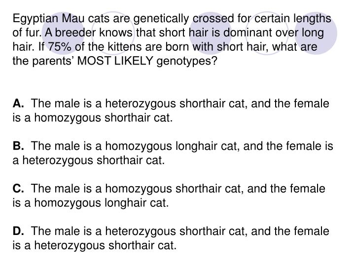 Egyptian Mau cats are genetically crossed for certain lengths of fur. A breeder knows that short hair is dominant over long hair. If 75% of the kittens are born with short hair, what are the parents' MOST LIKELY genotypes?