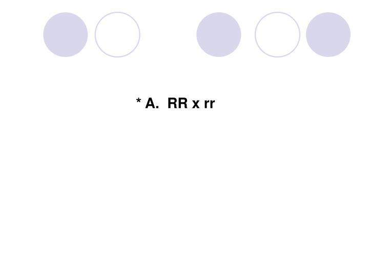 * A.  RR x rr