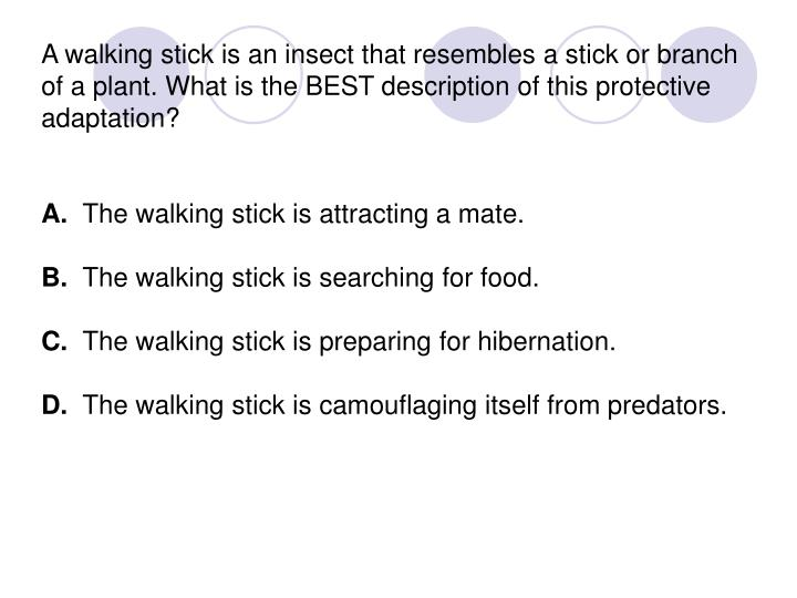 A walking stick is an insect that resembles a stick or branch of a plant. What is the BEST description of this protective adaptation?