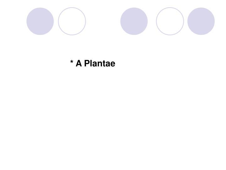 * A Plantae