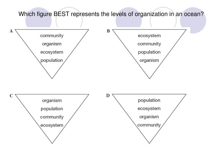 Which figure BEST represents the levels of organization in an ocean?