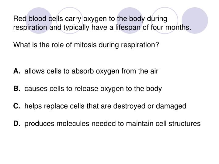 Red blood cells carry oxygen to the body during respiration and typically have a lifespan of four months.