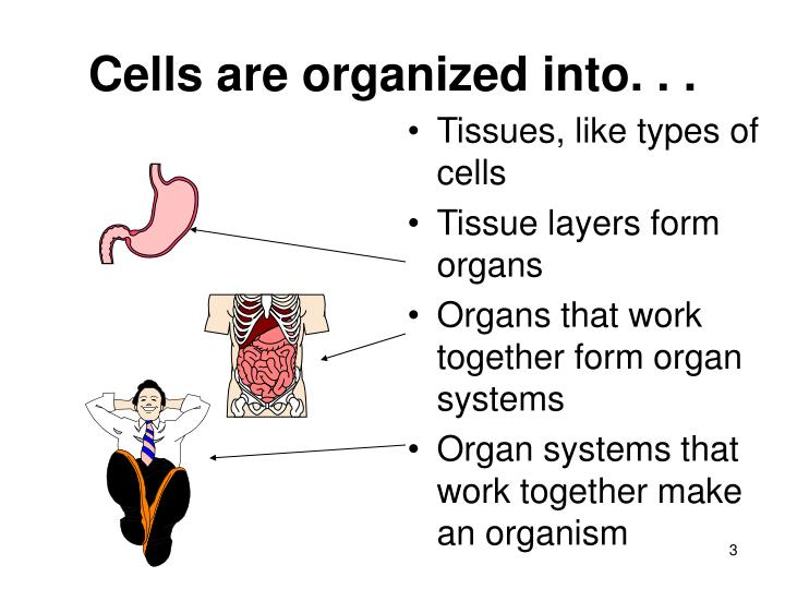 Cells are organized into. . .