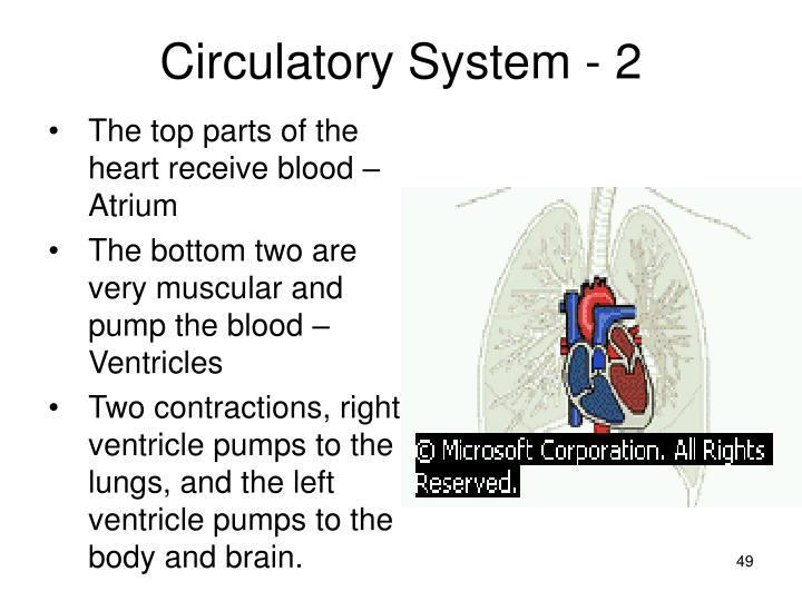 Circulatory System - 2