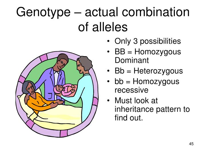 Genotype – actual combination of alleles