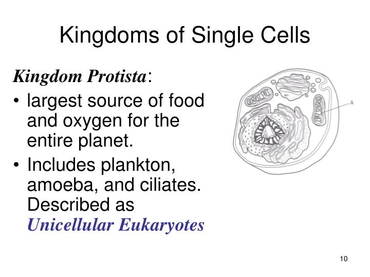 Kingdoms of Single Cells