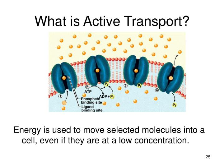 What is Active Transport?