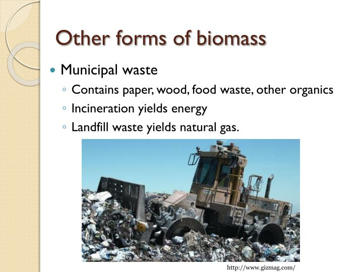 Other forms of biomass