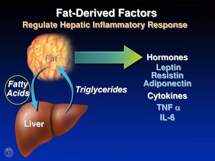 Fat-Derived Factors