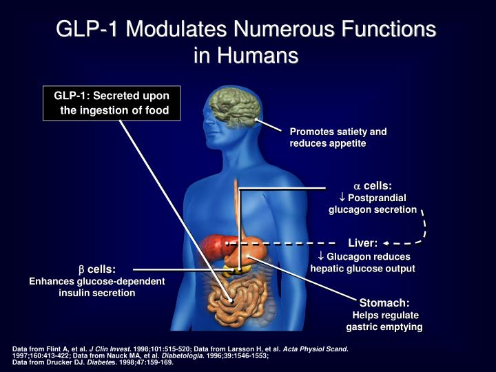 GLP-1 Modulates Numerous Functions