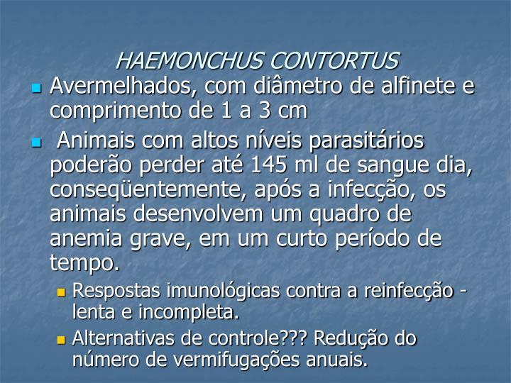 HAEMONCHUS CONTORTUS