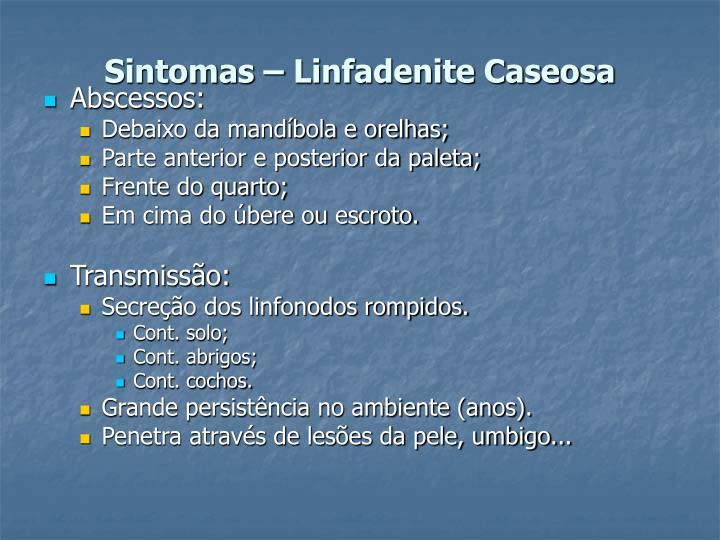 Sintomas – Linfadenite Caseosa