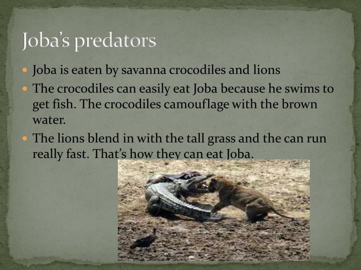 Joba's predators