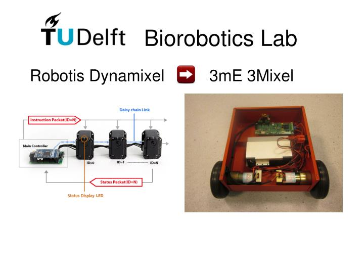 Biorobotics Lab