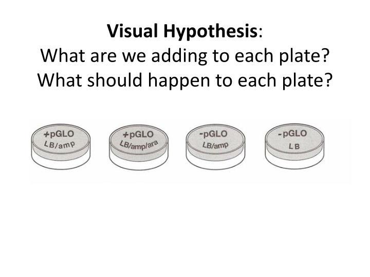 Visual Hypothesis