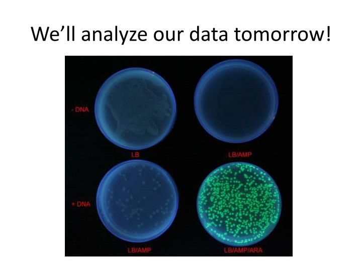 We'll analyze our